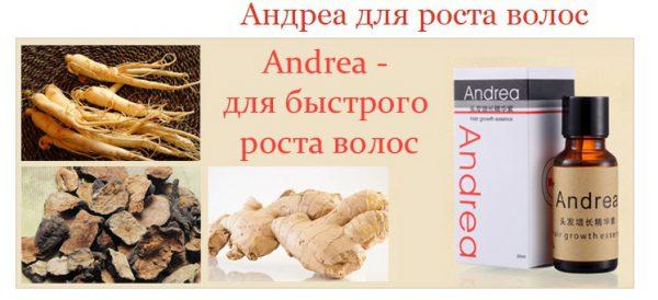 «Аndrea»